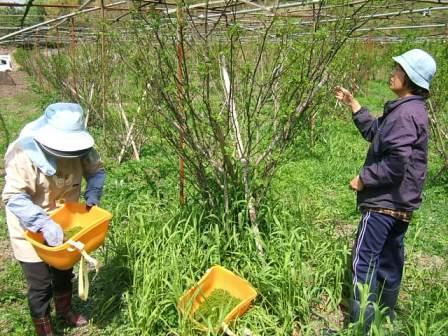 花山椒収穫、残り僅か_c0220321_1853237.jpg