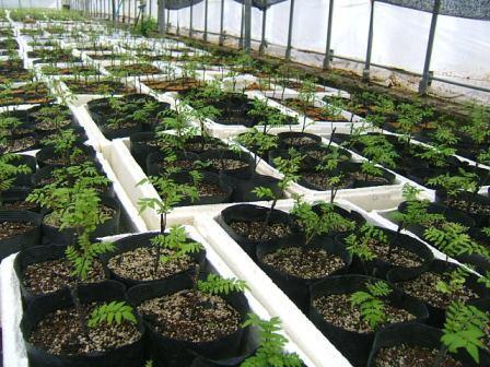 花山椒収穫、残り僅か_c0220321_1865447.jpg
