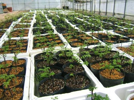 花山椒収穫、残り僅か_c0220321_1871558.jpg