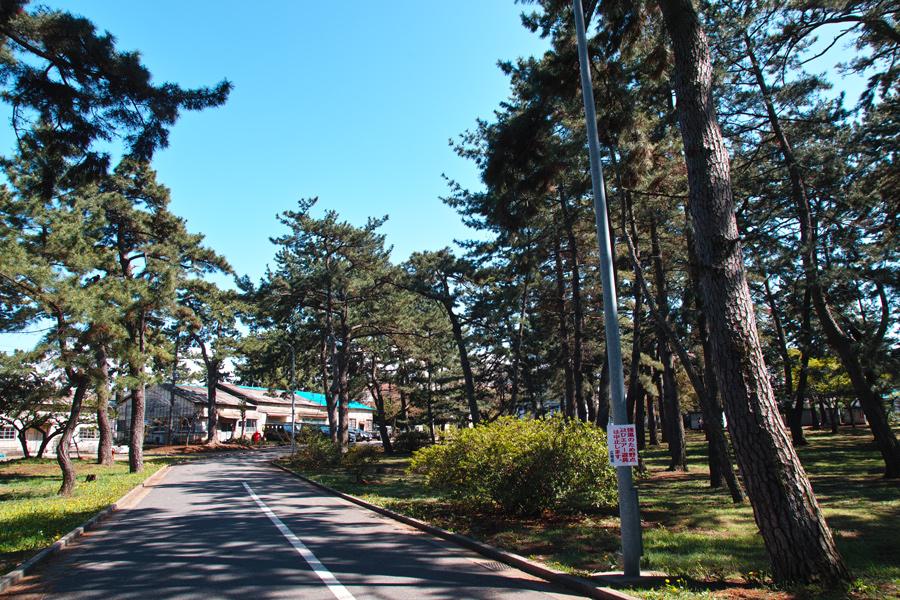 日本騎兵習練の場所~習志野の旅~_c0223825_15102693.jpg