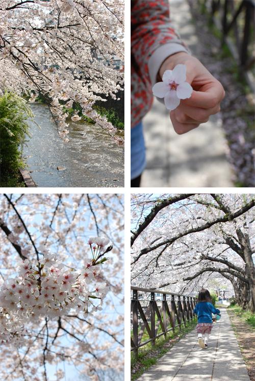 天神川の桜_e0195830_8285350.jpg