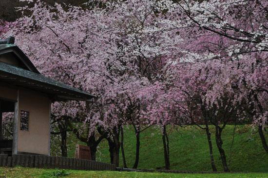 卯辰山公園(5)_c0093046_810525.jpg