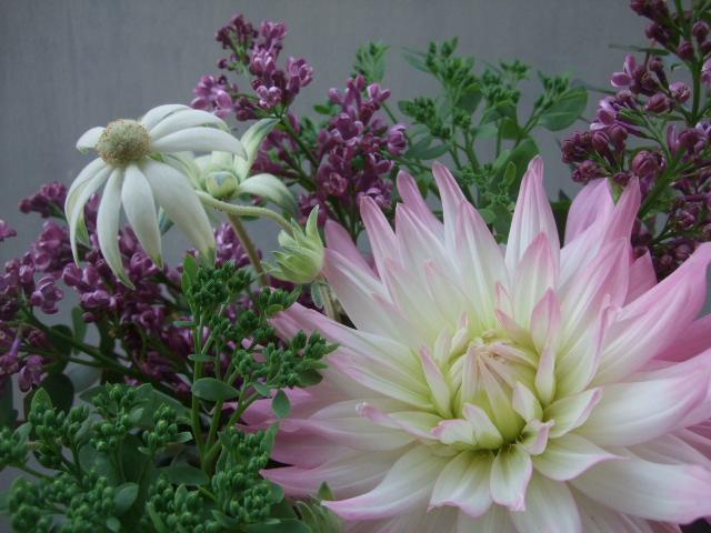 オークリーフ(透明感のある花たち)_f0049672_12491044.jpg