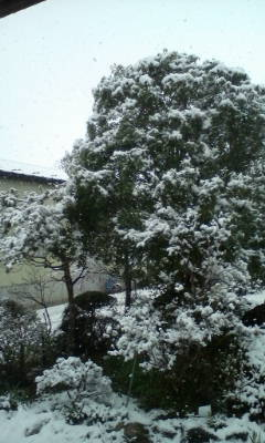 雪が降ってます。_d0026905_10254620.jpg