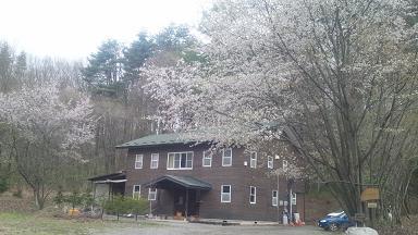 満開の桜が・・・・。_d0184405_2002732.jpg