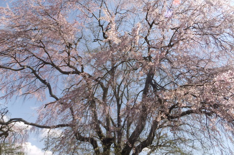 新緑の富士見でわが友、故岡部牧夫の落葉舎を訪ねる_c0242406_7371290.jpg