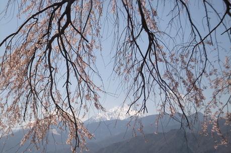 新緑の富士見でわが友、故岡部牧夫の落葉舎を訪ねる_c0242406_7392420.jpg