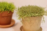 生活に植物の潤いを!_a0169017_12143387.jpg