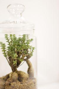 生活に植物の潤いを!_a0169017_1214518.jpg