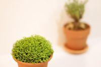 生活に植物の潤いを!_a0169017_12255868.jpg
