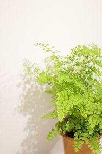 生活に植物の潤いを!_a0169017_12261150.jpg