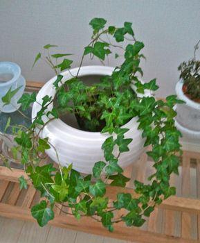 生活に植物の潤いを!_a0169017_1233216.jpg