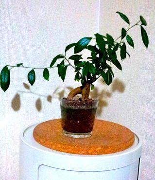 生活に植物の潤いを!_a0169017_1271989.jpg