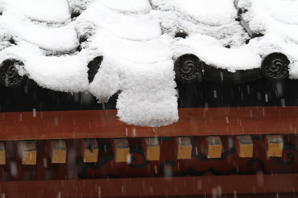雪降りの一日_c0111229_17584445.jpg