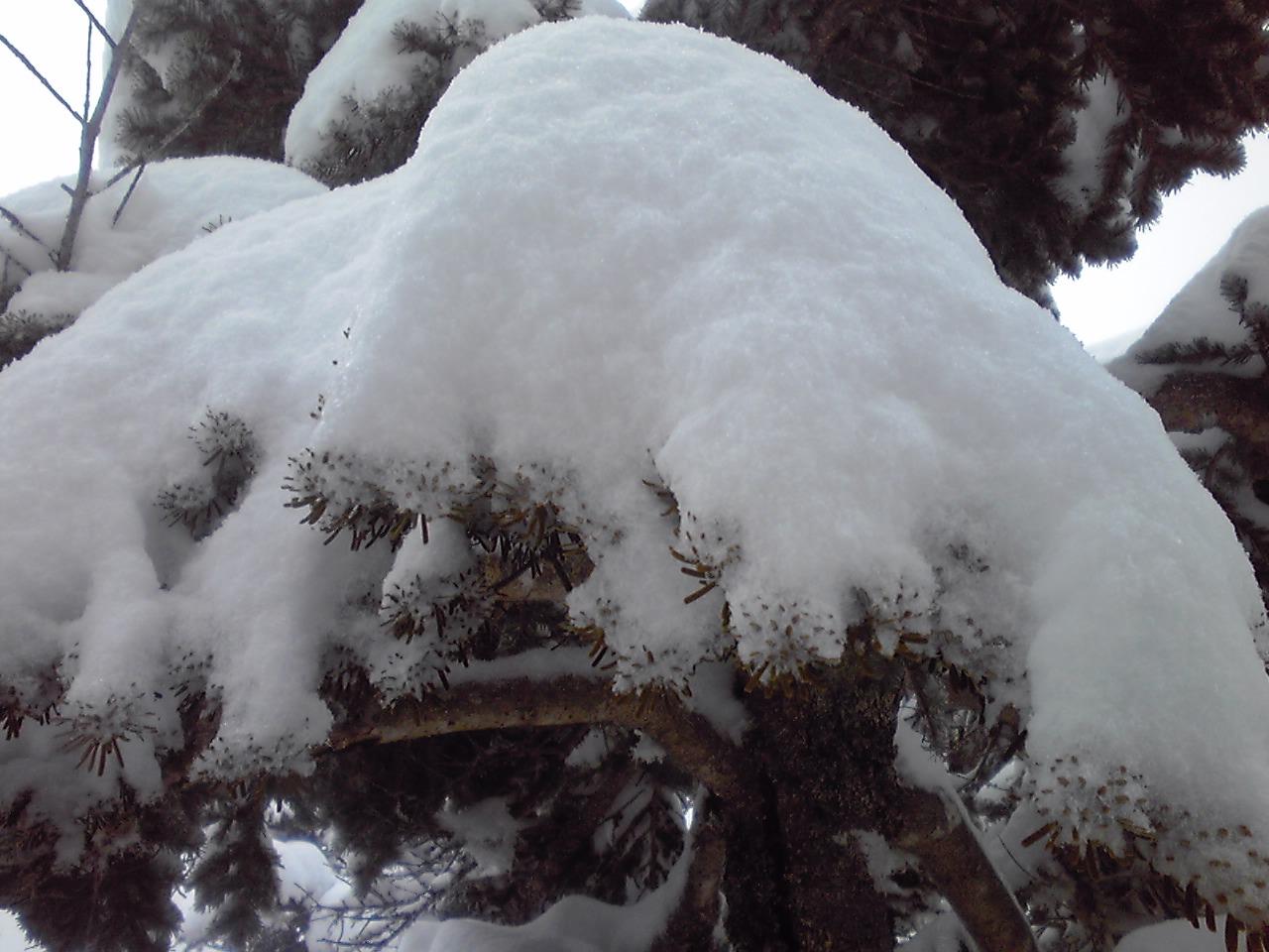 雪質_e0155231_1118255.jpg