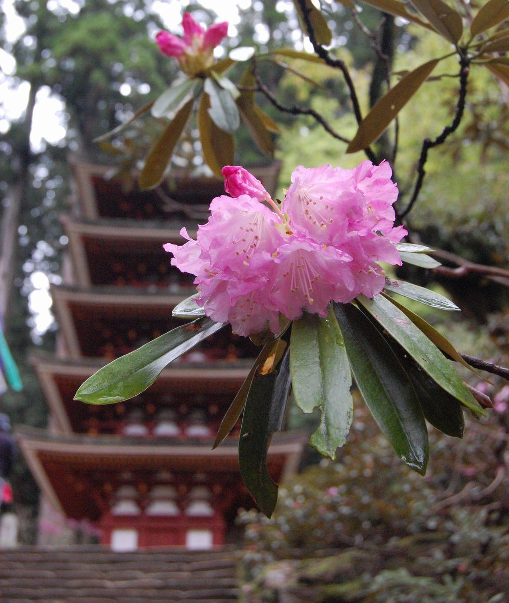 4月21日の室生寺は正御影供_a0237937_17412269.jpg