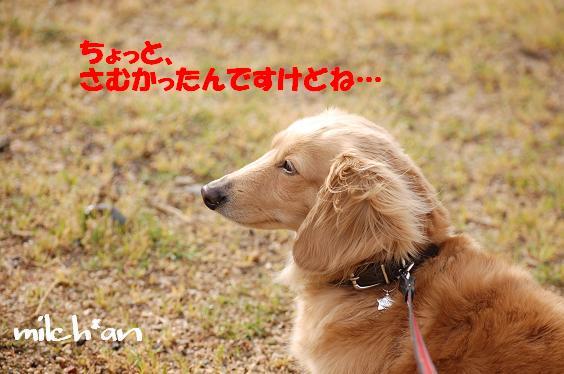 b0115642_2038441.jpg