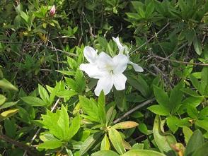 お花見 at 千鳥川 \(>_<)/~♪_e0163042_12401745.jpg