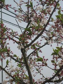春ですよーッ♪♪_e0163042_933263.jpg