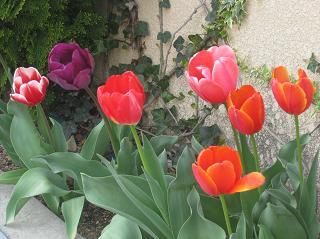 春ですよーッ♪♪_e0163042_9332638.jpg