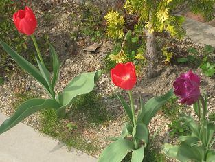 春ですよーッ♪♪_e0163042_9333926.jpg