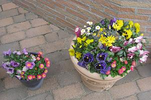 春ですよーッ♪♪_e0163042_9335340.jpg