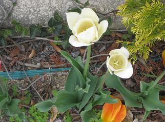 春ですよーッ♪♪_e0163042_934861.jpg