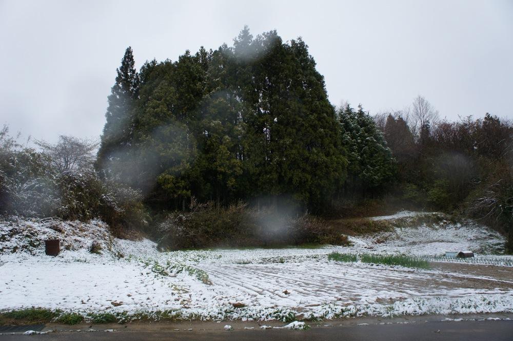 桜もブルブルの雪_d0001843_1956466.jpg