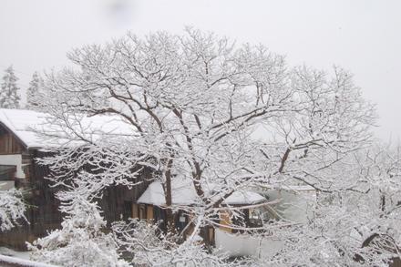 雪でも営業してます_d0249047_7584897.jpg