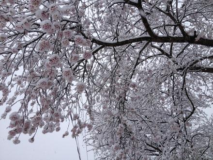 雪でも営業してます_d0249047_7591485.jpg