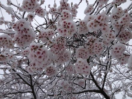 雪でも営業してます_d0249047_7592681.jpg