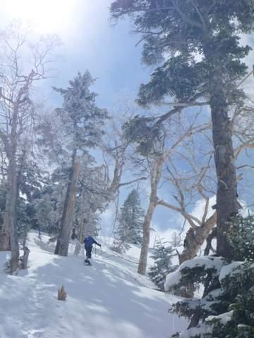 【滑走レポ 2013.4.11】 ラストパウダーを狙って@かぐら_e0037849_7531614.jpg
