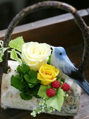 小鳥ちゃんたち。_a0118355_1616582.jpg