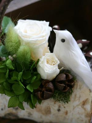 小鳥ちゃんたち。_a0118355_1616960.jpg
