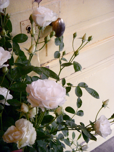 バラの季節。。。_a0229658_13192487.jpg