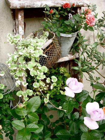 バラの季節。。。_a0229658_1339422.jpg