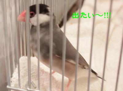 b0158061_2265233.jpg