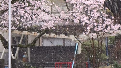 春なのに・・・ 雪が降っています_e0266363_100353.jpg