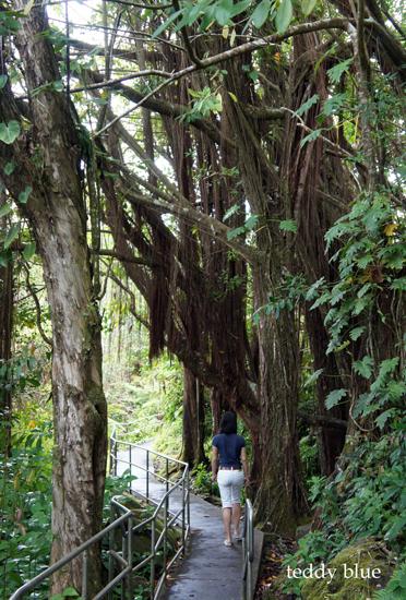 Akaka Falls State Park, Hawaii  アカカフォールズ_e0253364_12422694.jpg