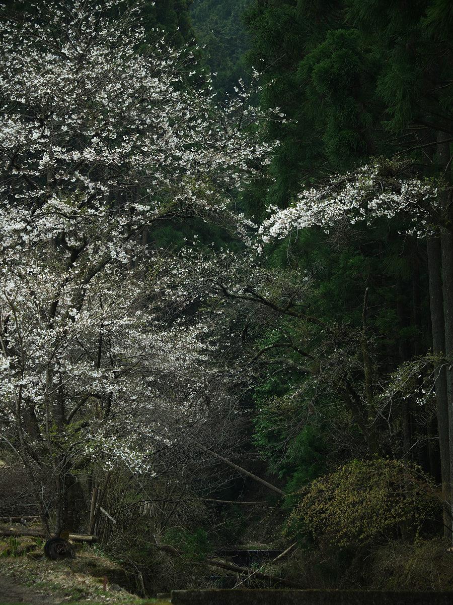 桜 2013 <奈良> オフ会  _f0021869_2335014.jpg