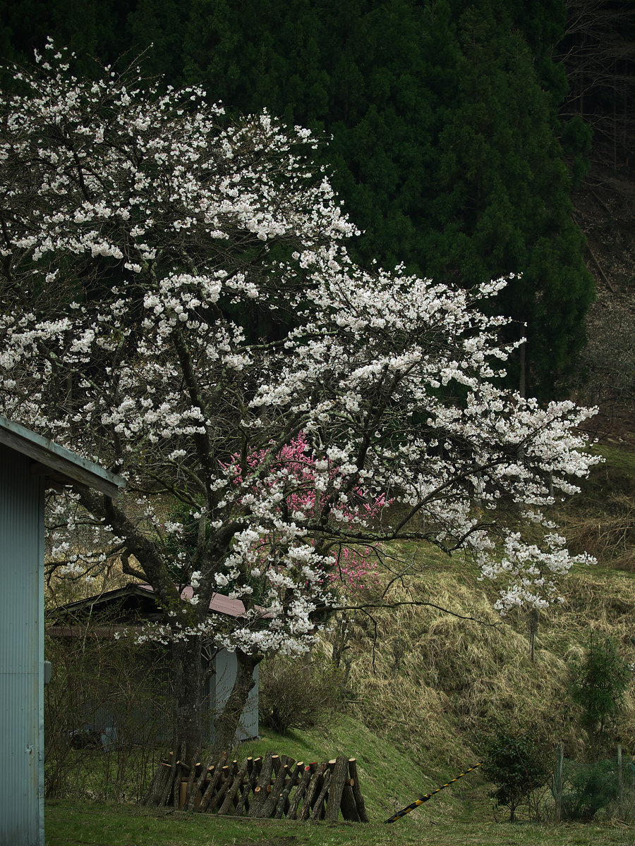 桜 2013 <奈良> オフ会  _f0021869_2335276.jpg