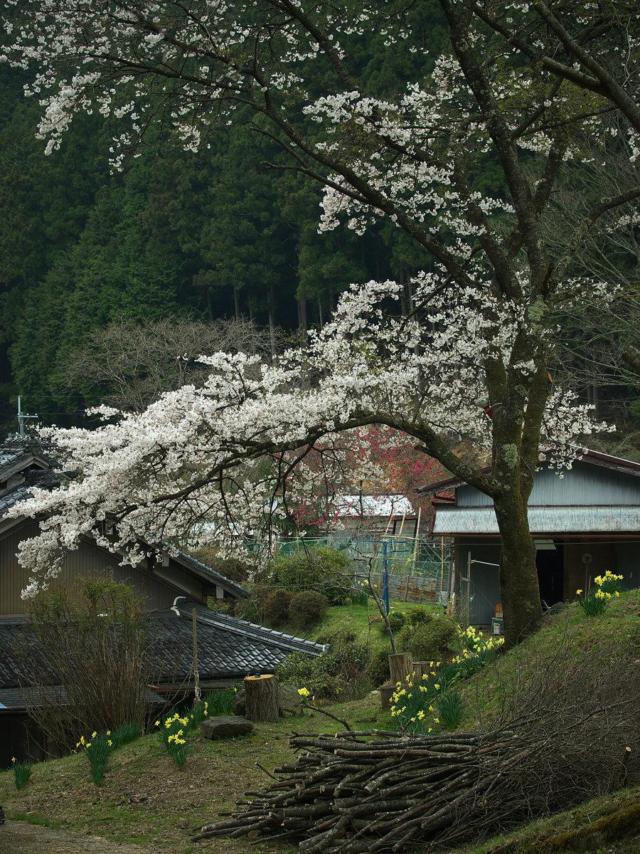 桜 2013 <奈良> オフ会  _f0021869_23355762.jpg