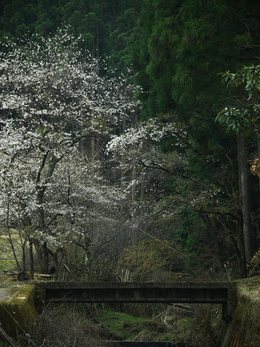 桜 2013 <奈良> オフ会  _f0021869_2336186.jpg