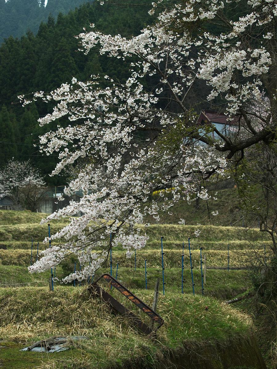 桜 2013 <奈良> オフ会  _f0021869_23363989.jpg