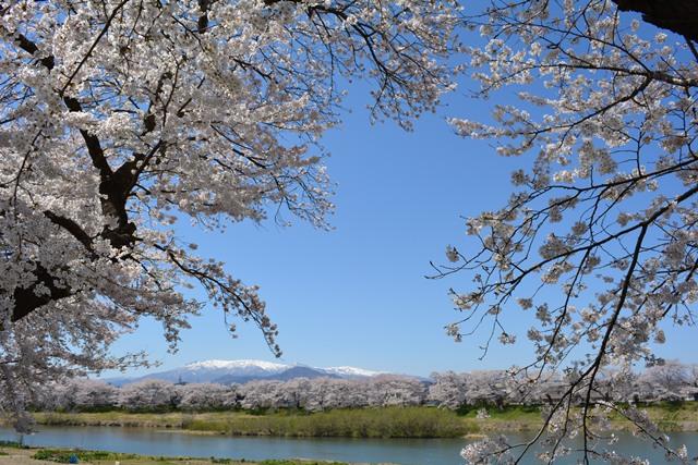 祝 ピーチ 関空~仙台就航!桜を追って、仙台・宮城へ!①_b0053082_1731554.jpg