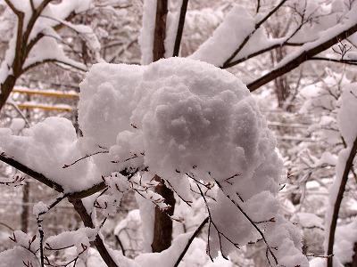 まさかの雪_d0133485_13582127.jpg