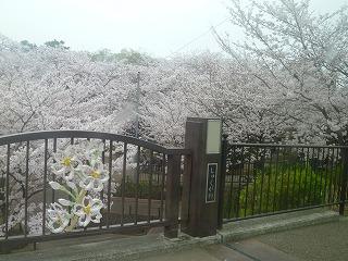 お花見<アクティブライフ夙川・グループホーム>_c0107602_1461536.jpg