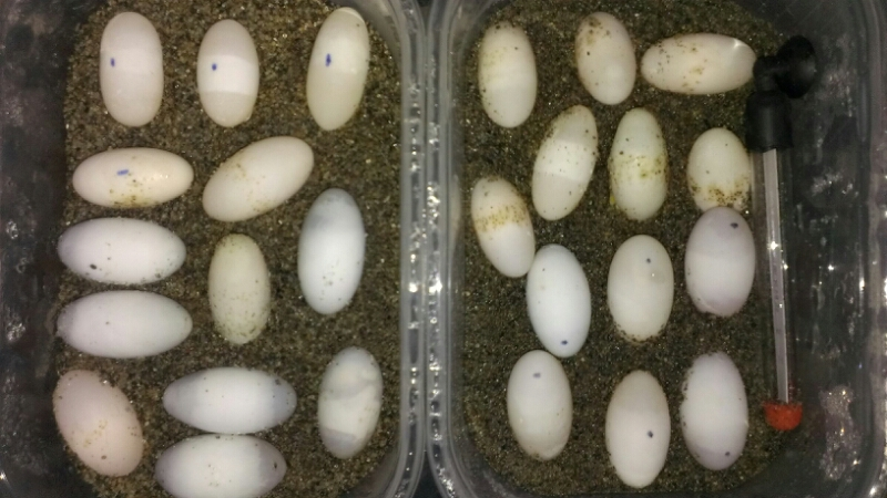 卵の現在_f0253407_0191051.jpg