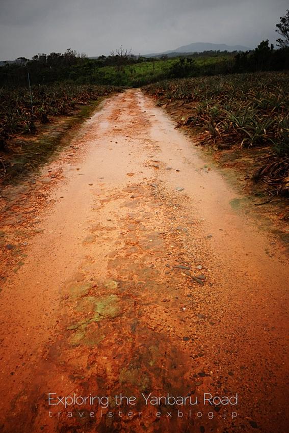 Exploring the Yanbaru Road._b0108109_20541935.jpg