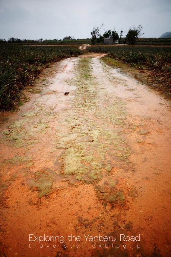 Exploring the Yanbaru Road._b0108109_20544146.jpg